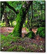 Natural Emeralds II. Wicklow. Ireland Acrylic Print