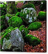 Natural Emeralds. Wicklow. Ireland Acrylic Print