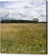 Natural Forestry Gees The Netherlands Acrylic Print