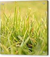Natural Grass Acrylic Print