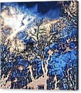 Natural Highlights Acrylic Print