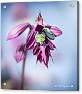 Natural Bug Life Acrylic Print