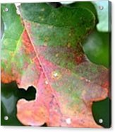 Natural Oak Leaf Abstract Acrylic Print