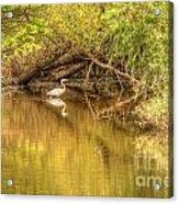 Natural Reflection Acrylic Print