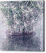 Natural Reflections Acrylic Print