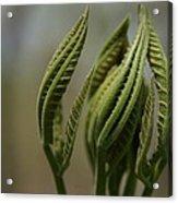 Natural Texture Acrylic Print