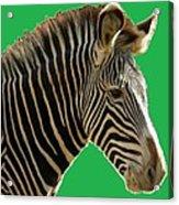 Natural Zebra Acrylic Print