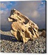 Naturally Sculpted Waterworn Wood On Pebble Beach Acrylic Print