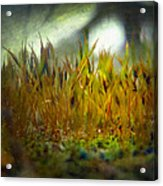 Nature #10 Acrylic Print