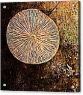 Nature Abstract 22 Acrylic Print