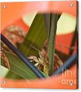 Nature Always Finds A Way Acrylic Print