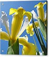 Nature Art Prints Yellow White Irises Flowers Acrylic Print