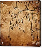 Nature Canvas  Acrylic Print