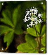 Nature Celebrates Spring With A Burst Of Botanical Fireworks Acrylic Print