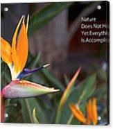Nature Does Not Hurry Bird Of Paradise Acrylic Print