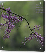 Nature Does Not Hurry Blossoms In Purple Acrylic Print