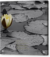 Nature Does Not Hurry Waterlily Acrylic Print