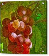 Nature Goodness Grapes On The Vine Acrylic Print