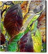 Nature Has Been Recycling For Ages  Acrylic Print