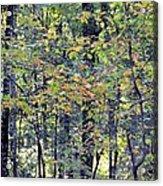 Nature In Autumn 2012 Acrylic Print