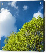 Nature In Spring - Bright Green Tree And Blue Sky Acrylic Print