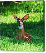 Nature In The Back Yard  Acrylic Print