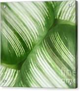 Nature Leaves Abstract In Green 2 Acrylic Print by Natalie Kinnear