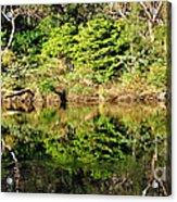 Nature Mirrored Acrylic Print