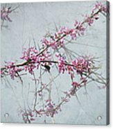 Nature Nurtures Acrylic Print