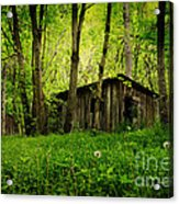 Nature Reclaims Acrylic Print