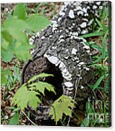 Nature Recycled Acrylic Print