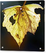 Nature Recycles Acrylic Print