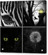 Nature Squares - Collage Acrylic Print
