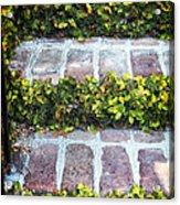 Nature Steps Acrylic Print