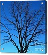 Nature Tree Acrylic Print by Boon Mee