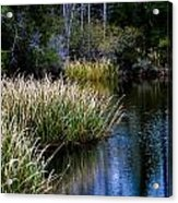Nature Walk 2 Acrylic Print