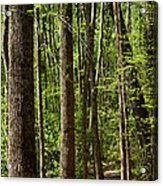Nature Walk Early Spring Acrylic Print