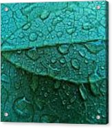 Natures Abstract Acrylic Print