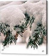 Nature's Art Work Acrylic Print by Michelle and John Ressler
