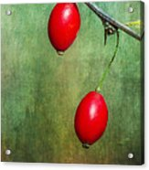 Nature's Baubles Acrylic Print