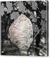 Natures Bee Hive Acrylic Print