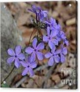 Nature's Bouquet Acrylic Print