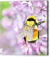 Natures Buzzing Beauty Acrylic Print