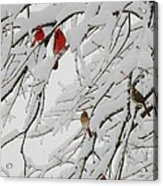 Nature's Christmas Ornaments Acrylic Print