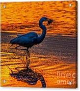 Natures Fisherman Acrylic Print