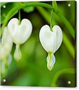 Nature's Hearts Acrylic Print