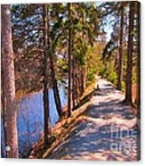 Natures Highway Acrylic Print