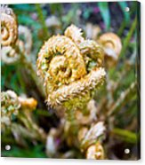 Natures Knot-how To Twist Acrylic Print