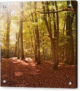 Nature's Light Acrylic Print