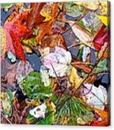Nature's Paintbrush Acrylic Print